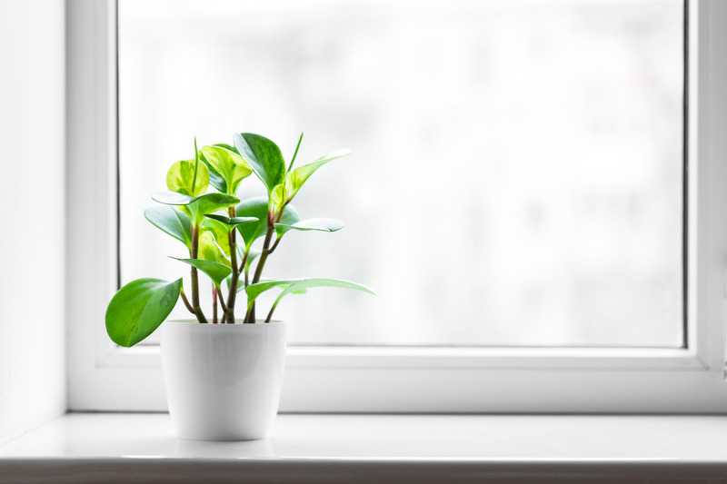 Clean Window With Plant